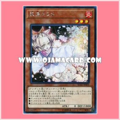 RC02-JP009 : Ash Blossom & Joyous Spring / Haru Urara (Secret Rare)