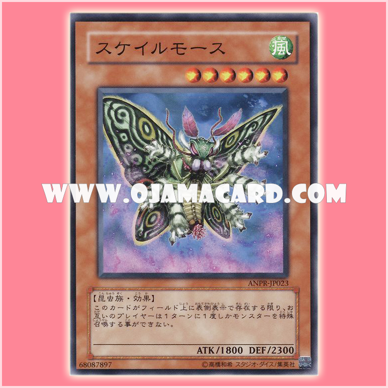 ANPR-JP023 : Scary Moth / Scare Moth (Common)