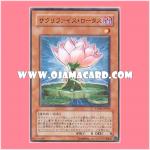 PTDN-JP004 : Samsara Lotus / Sacrifice Lotus (Common)