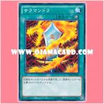 15AX-JPM40 : Salamandra (Common)