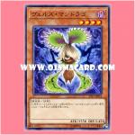 ST17-JP011 : Evilswarm Mandragora / Verz Mandrago (Common)