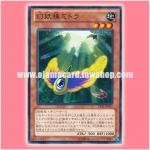 LVAL-JP035 : Mystic Macrocarpa Seed / Mystic Seed Mitra (Common)