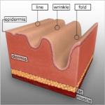 Hyaluronic Acid วิตามินชะลอความร่วงโรยของผิว ริ้วรอยแลดูลดเลือน