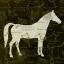 แนพกิ้น 33x33 Horse 13305626 thumbnail 1