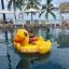 แพยางลอยน้ำ รูปเป็ดสีเหลืองยักษ์ใหญ่ Intex thumbnail 2